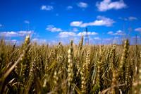 Subsidies op energiegebruik landbouw en industrie niet meer van deze tijd image