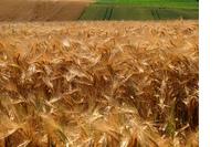 Brussel dwingt Noord-Nederlandse agrariërs tot koerswijziging image