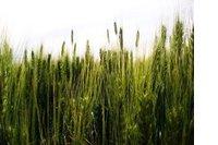 Richt een groene investeringsbank op image