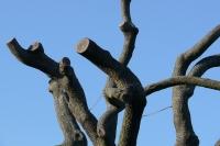 Gesnoeide boomtakken